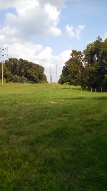 Large grass pastures