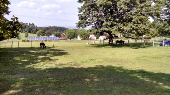 Non-kick-through and board fence pastures